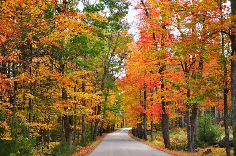 Best Places to See the Fall Foliage in Montgomery County
