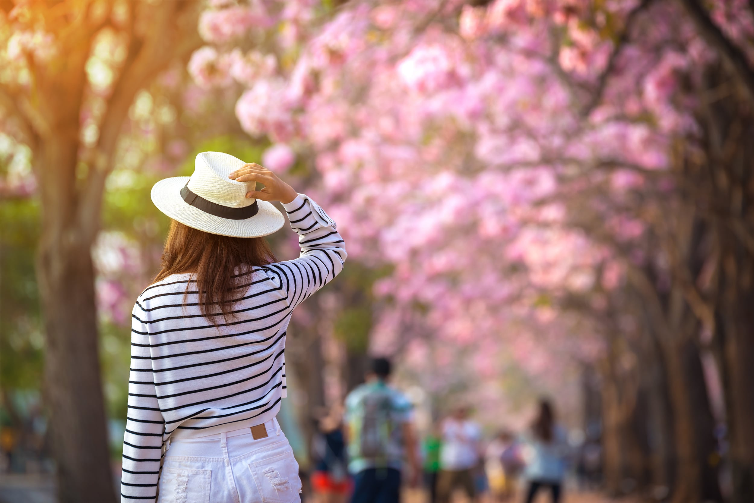 Walking though cherry blossom trees in Washington, DC