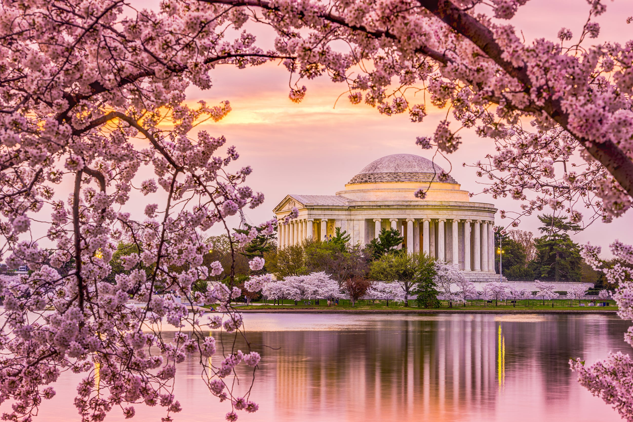 History of the Cherry Blossoms of Washington, DC | Visit ...