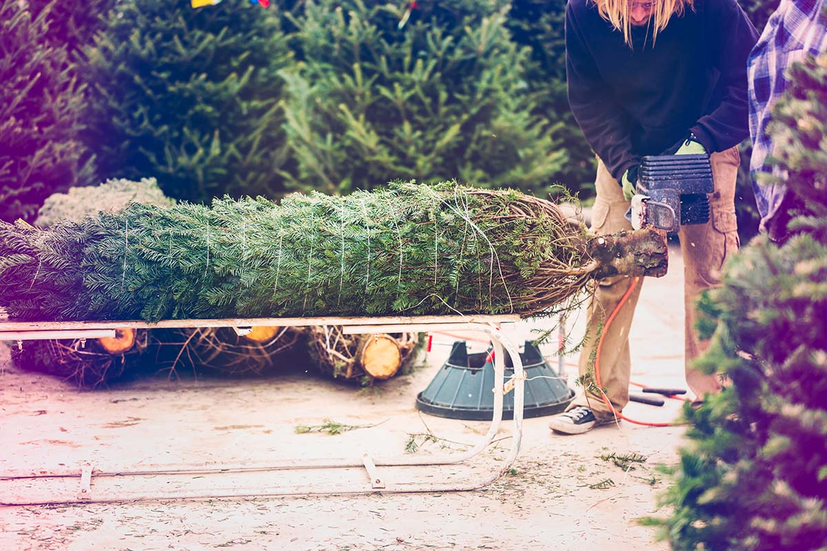 3 Farms to Pick Up Your Christmas Tree | Visit Montgomery