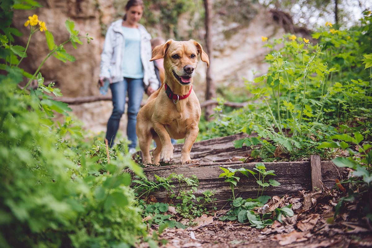 A Dog-Friendly Weekend Getaway