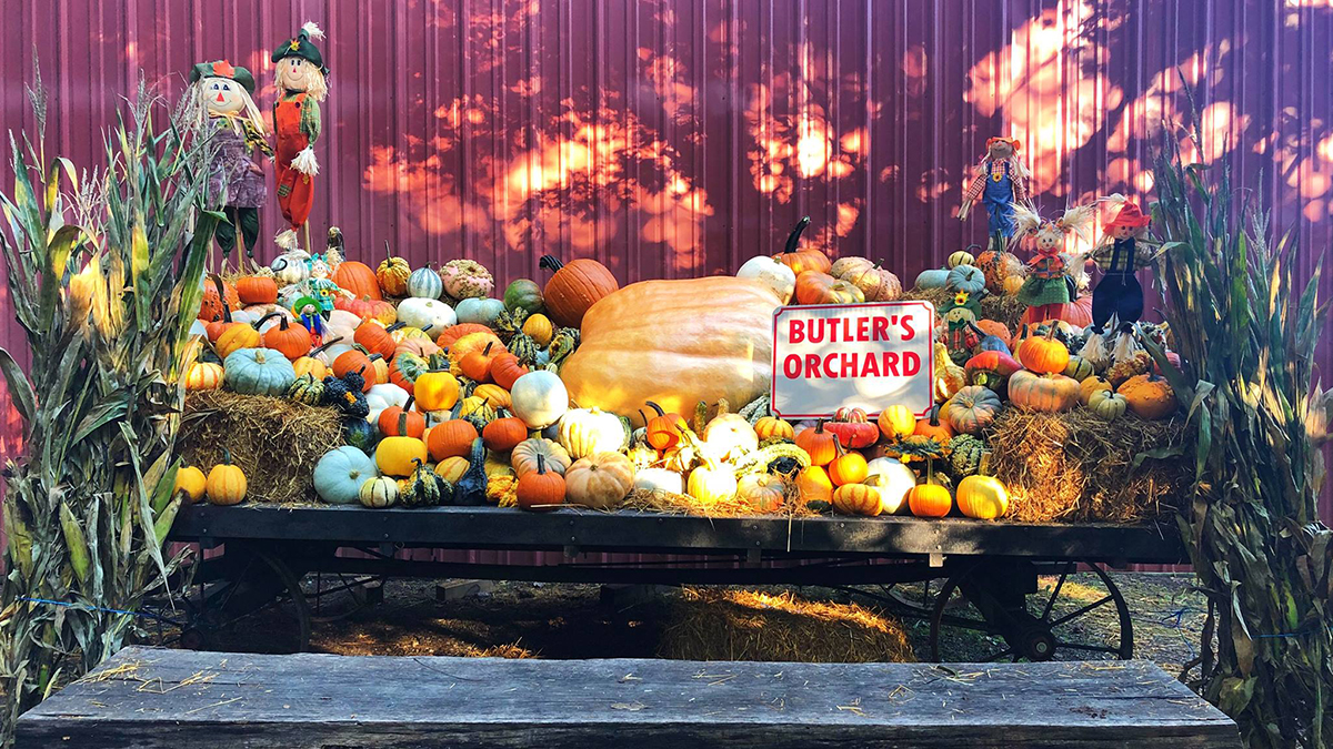 Ultimate Guide to Fall Festivities in Montgomery County